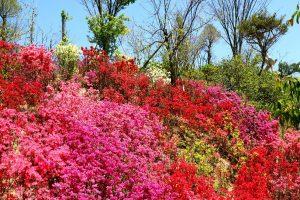 晴の桂花園