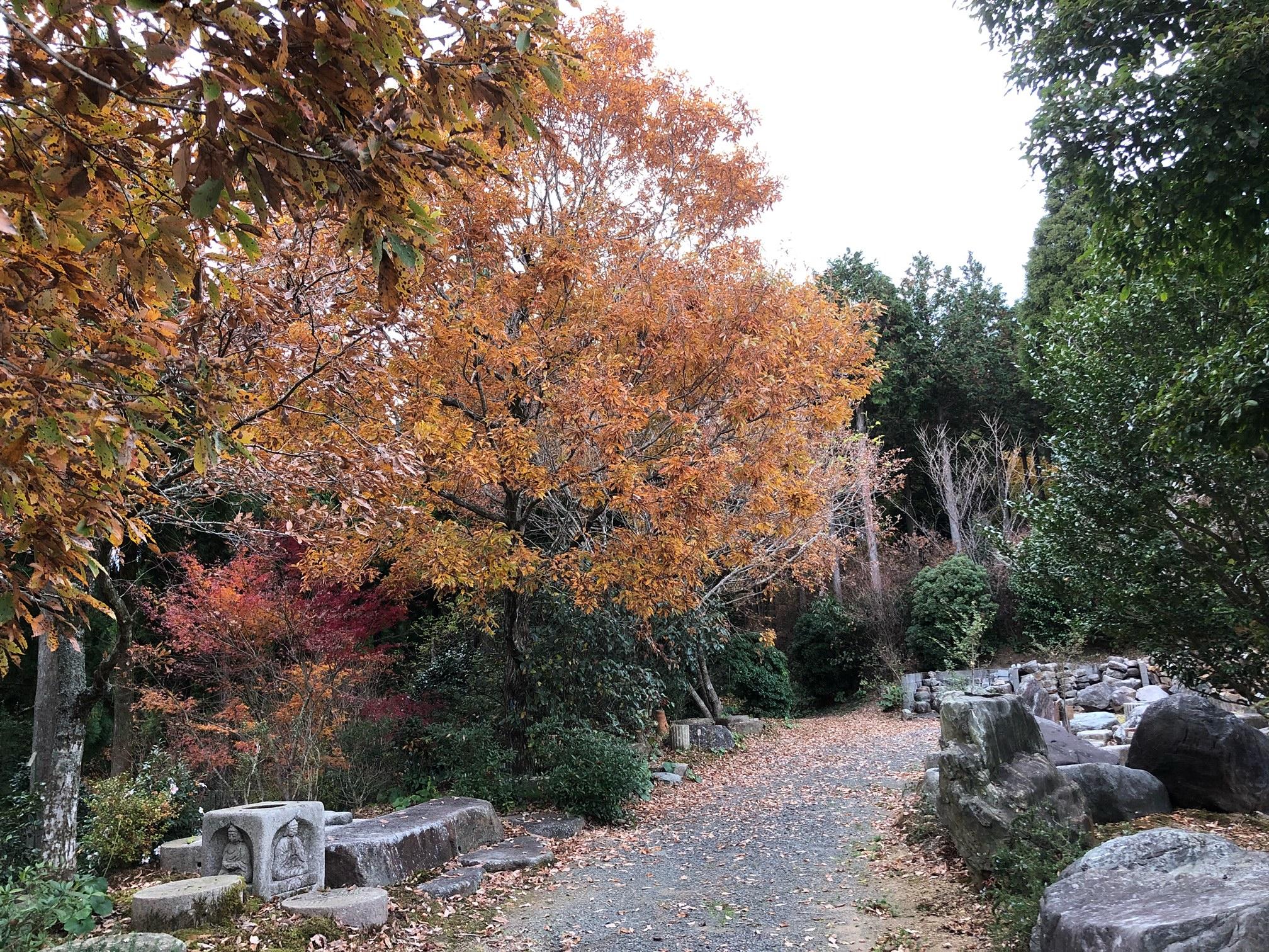 常緑樹と落葉樹の違い